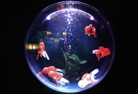 Escaping The Expatriate Bubble…